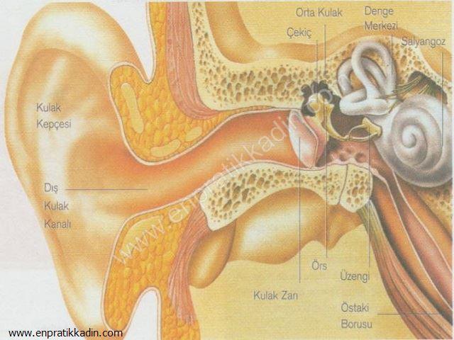Çocuklarda Duyma ve Kulak Anatomisi