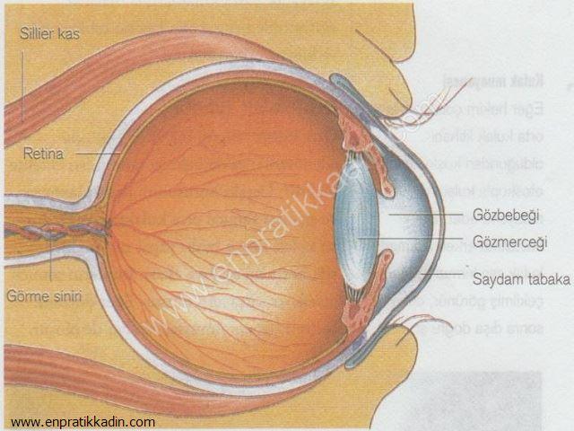 Çocuklarda Görme Bozukluğu ve Göz Anatomisi