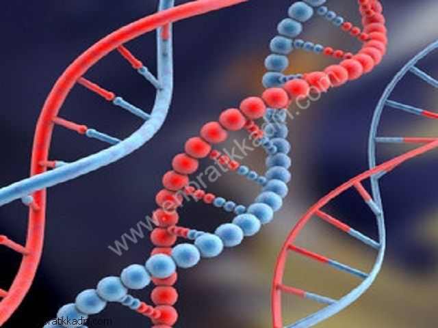 Alfa Feto Protein ( AFM )