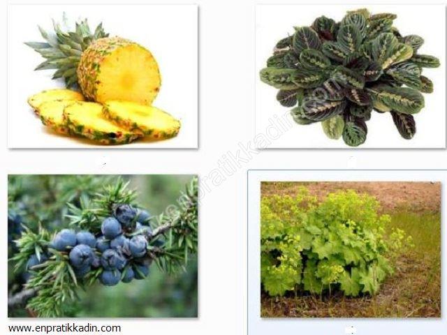 Ananas, Ararot, Ardıç ve Arslanpençesi