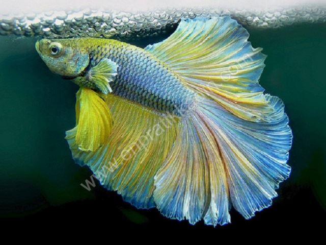 Balık Burcu İnsanında Sevgi