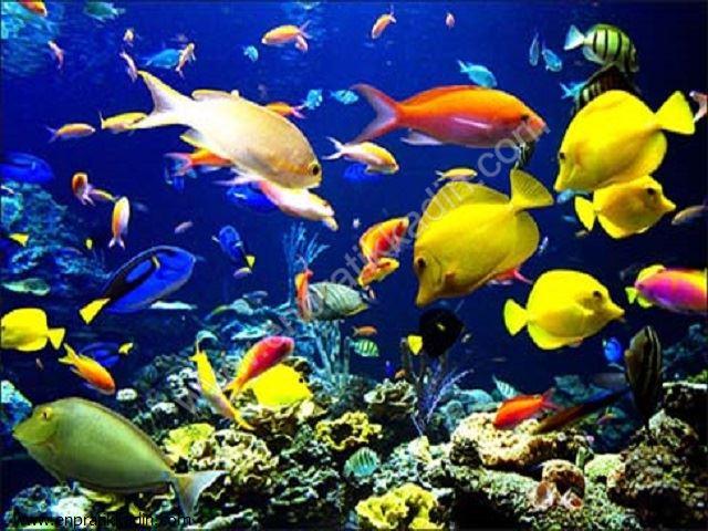 Balık Burcunda Doğanların Güzelliklere Düşkünlüğü