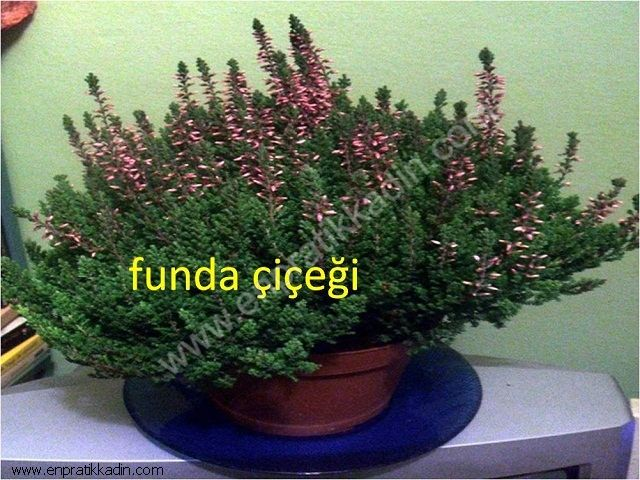 Bitkiler ve Faydaları