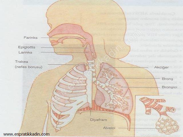Çocuklarda Akciğer Enfeksiyonu Önlemleri ve Nefes Alma