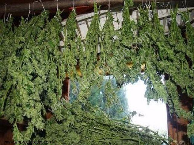 Evde Bitkileri Nasıl Kurutabilirsiniz
